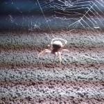 Pavouček kostel