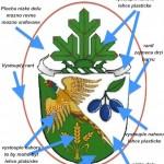 Poznámky pro výrobu odznaku